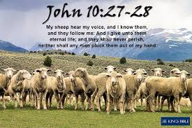 John 10:27-28 My sheep hear my voice,... - King James Bible (www ...